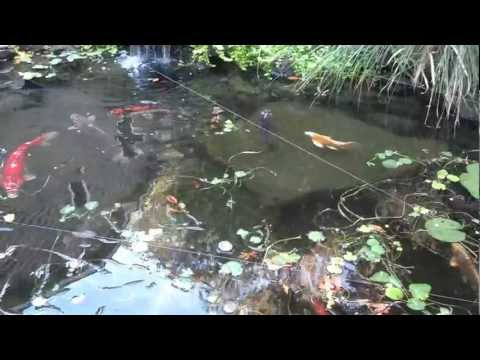 Pond Protection With Fishing Line