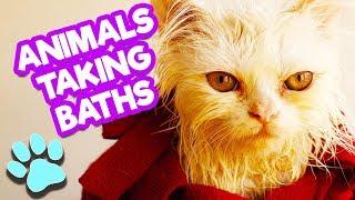 Animals Taking Baths Pt 1 | Funny Animals Compilation |#thatpetlife