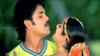 Azad Movie || Hai Hai Nayakaa Attamma Koduka Video Song || Nagarjuna, Soundarya, Shilpa Shetty