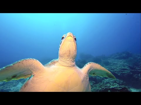 Zanzibar Diving video: Mnemba island with One Ocean