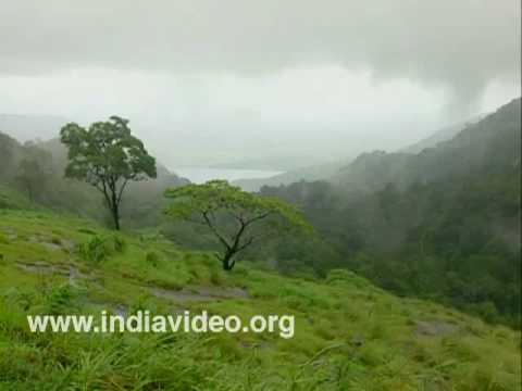 Misty Nelliyampathi hills
