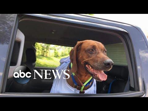 Volunteers drive lost dog thousands of miles to return to owner