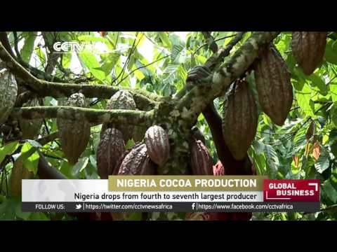 Nigeria drops from fourth to seventh largest cocoa producer