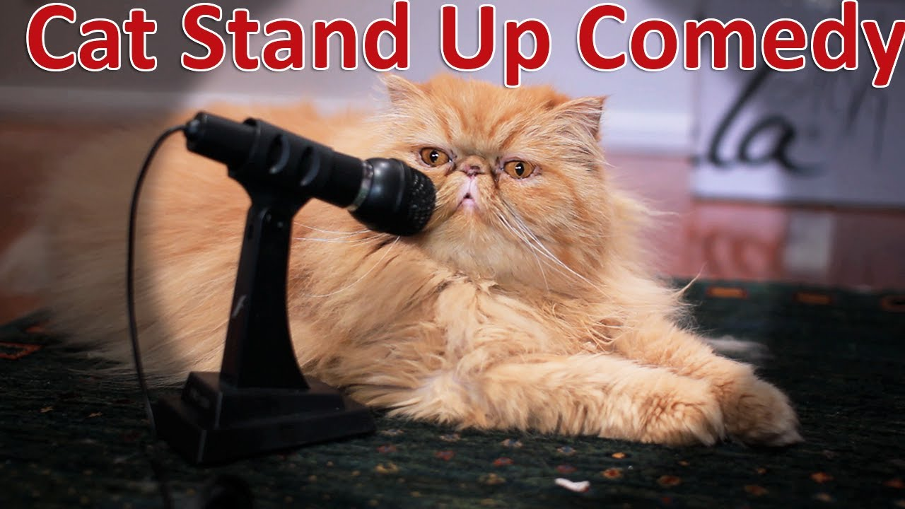 Out Of  Cats Comedian