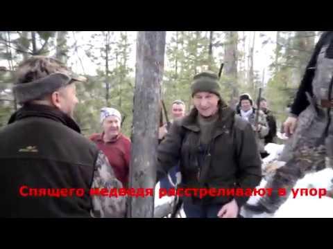 Как губернатор Левченко медвед� убивал