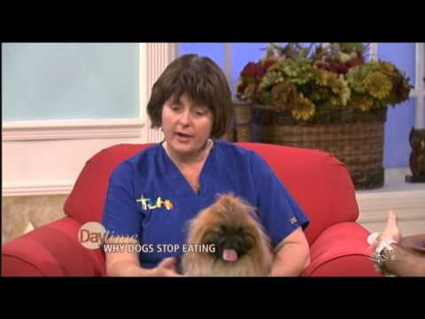 Tampa Veterinarian, Dr. Webster, explains why your dog might not be eating