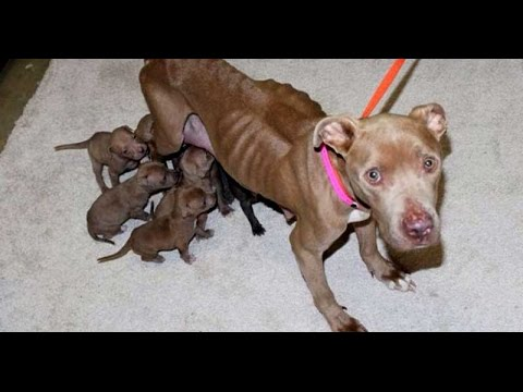 patience animal cruelty and backyard breeding victims