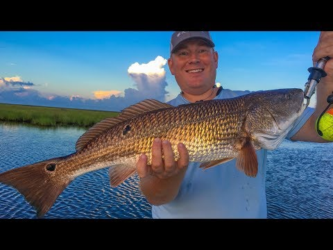 Reds first, then offshore fish in inshore waters