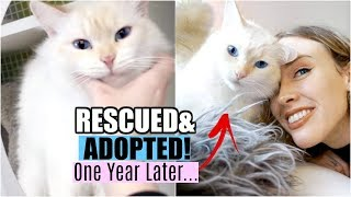 I ADOPTED THE PERFECT RESCUE CAT - 1 Year Later... | Louise Update!