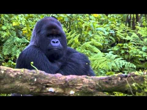 Gorilas en la niebla youtube for Gorilas en la niebla
