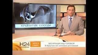 Летучие мыши поселились на балконе иркутской многоэтажки.(, 2014-07-21T07:09:18.000Z)
