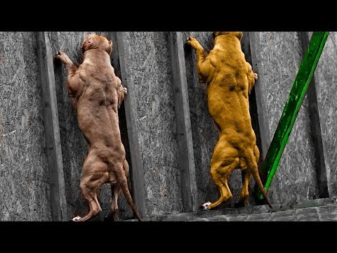 Top 10 Highest Jumping Dog Breeds