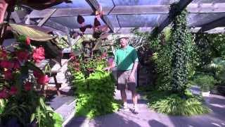 Foliage Plants: Part 3