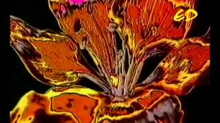 The Shamen  - Omega Amigo