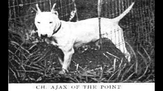 Bull Terrier Ancestry