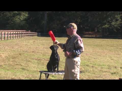 Jack Crawford Retriever Training