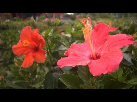 Choosing Tropical Plants | At Home With P. Allen Smith