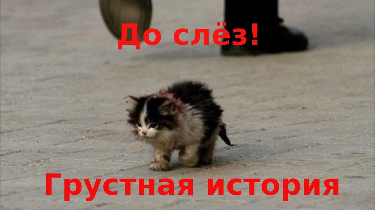 Он шёл по улице и тихо плакал. Облезлый, одноухий, с больною лапой...