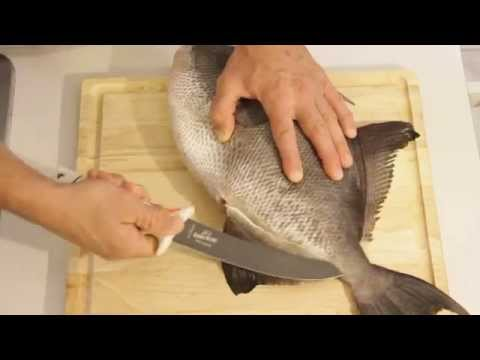 How To Dress (Filet) A Triggerfish [Raw Footage]