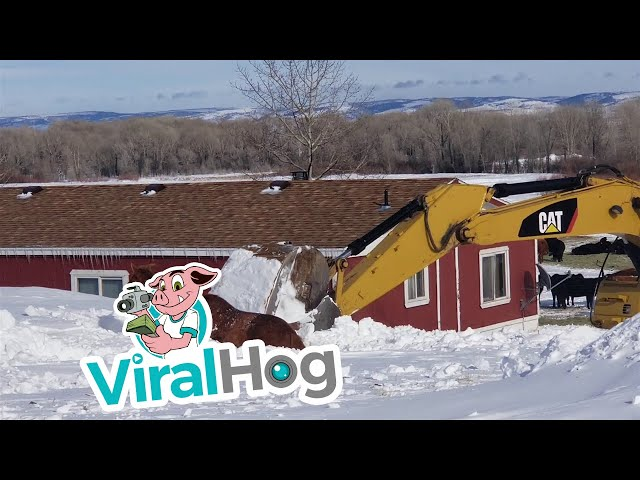 Blizzard Buried Horse is Delicately Dug Out || ViralHog