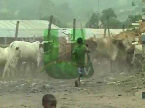 Activities Of Fulani Herdsmen In Atebubu