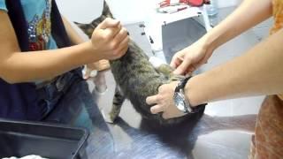 Хрюкина-кот-перелом ДВУХ лап.