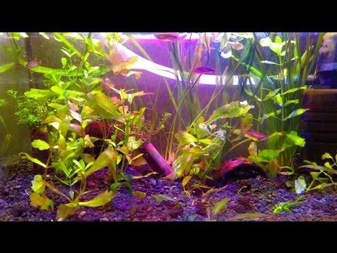 Zakładamy Akwarium Cz5 Modyfikacja Lampy Led Plus światło Dla Roślin
