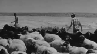 Chaim Topol חיים טופול  - Shir Hanedudim שיר הנדודים (Israel, 1964)