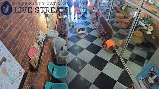 River Kitty Cat Café Live Stream