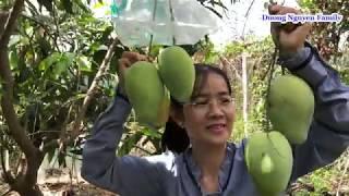 Gambar cover Khám Phá Vườn Trái Cây Nhà Duong Nguyen Family