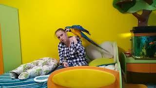 Выбор игрушек для попугая: Содержание большого попугая в квартире