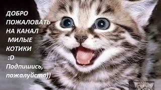 Видео поднимает настроение милые и добрые котики и котята