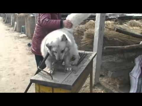 Insane animal abuse