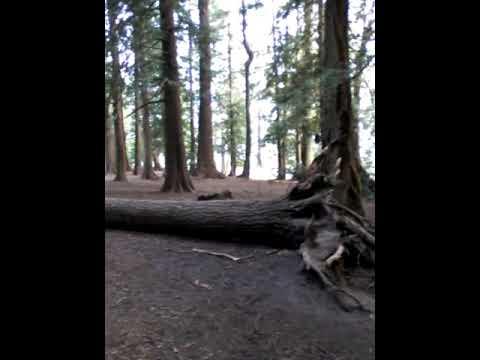 Mt. Douglas Wildlife in action (Victoria, BC)