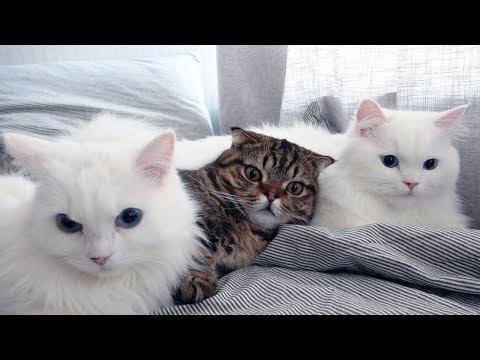 고양이들이 침대 위에 옹기종기 모여있어요
