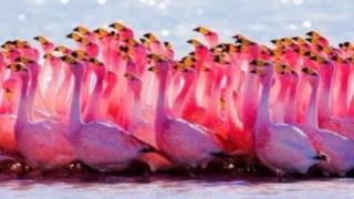 видео Стихи про птиц