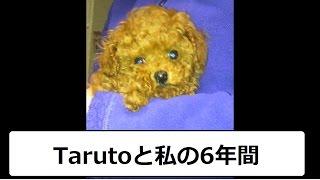 Tarutoとの6年間の思い出をまとめてみました!! 小さい頃のムービーは残...