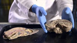 we are modified fish a history of human evolution hhmi biointeractive video