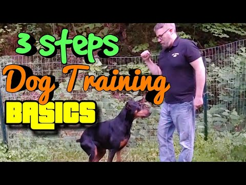 Basic Dog Training - Doberman Pinscher Vlog