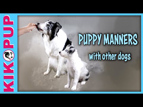 Puppy Manners - with other dogs getting treats