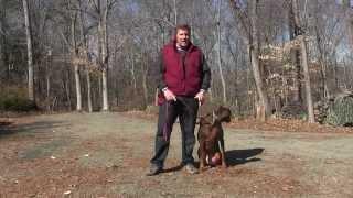 Spartan  Doberman Dog Training King NC