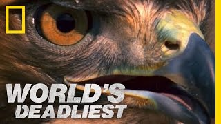 Rattlesnake vs. Hawk | World's Deadliest