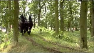 Le Cheval Frison