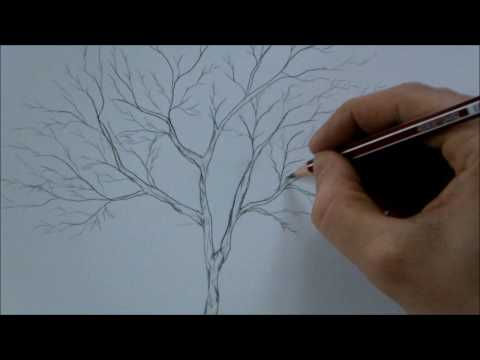 how-to-draw-a-tree-step-by-step-for-beginners-in-8-minutes