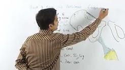 Anatomy Front of the Thigh ( Fascia Lata ) - Part 3   ( Dr.G.Bhanu Prakash )