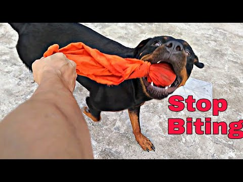 how-to-train-your-puppy-to-stop-biting-you-or-other-things-in-hindi-||-review-reloaded