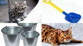 Учимся различать животных, растения и предметы