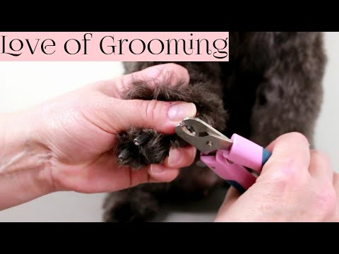 How to Clip Black Dog Nails