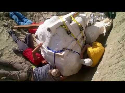 Descubren un cráneo descomunal de un Tyrannosaurus Rex