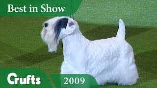 Sealyham Terrier wins Best In Show at Crufts 2009 | Crufts Dog Show